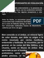 Ejemplos Interesantes de Fosilización.pdf1