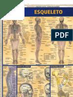 Resumao Esqueleto Humano