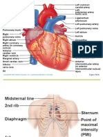SCIT 1408 Applied Human Anatomy and Physiology II - Heart Chapter 18 A