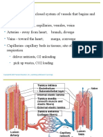 SCIT 1408 Applied Human Anatomy and Physiology II - Vessels Chapter 19 A
