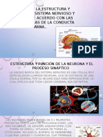 Describe la estructura y funciones del sistema nervioso y endocrino, de acuerdo con las bases biológicas de la conducta humana..