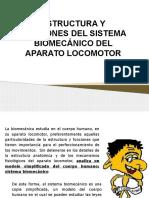 Estructura y Funciones Del Sistema Biomecanico