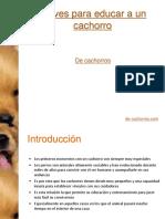 Claves para educar a un cachorro