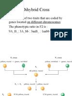 BIOL 3301 - Genetics Ch2B - Dihybrid Cross St