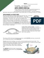 2013 Turtle Lab