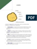 LA-MADERA-Propierdades y clasificación