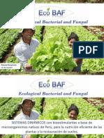 EcoBAF 2016