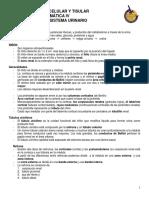 Notas del sistema Urinario 2010