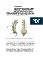 Anatomy of Low Back Pain