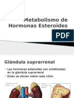 Metabolismo de Hormonas Esteroides y Estres. Final