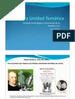 4.Org Celular 1-Prof Veronica Fasulo
