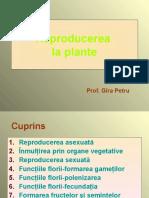 reproducerea la plante.ppt
