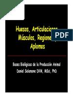 Huesosarticulacionesmusculosregionesyaplomos 130328102402 Phpapp01 (1)