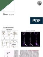 04 Neuron As