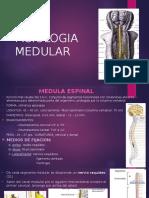 Fisiologia Medular