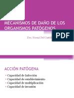 6.Mecanismos de Daño de Los Organismos Patógenos