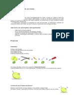 Proyecto de Fisica (Pila de Limon)