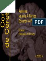 Cortes Cerebro (1)