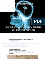 evolucion estructura y funcion sistema nervioso2016.ppt