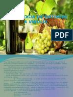 Tehnologia de Obtinere a Vinului