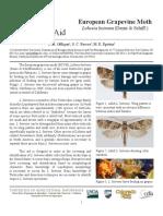 Clave Lobesia Adultos (Ingles)