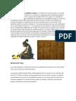 Escritura Maya y todo sobre los mayas