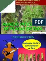 MIP EN TAYA - AGRONOMICA - PERU