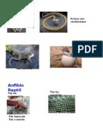 Acomparar_anfibio y Reptil
