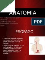 Esofago Estomago y Duodeno
