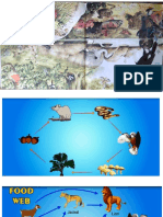 Food Chain Ppt Pict