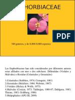 Clase Euphorbiaceae