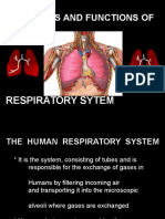 Respiratory System (Anatomy and Physiology)
