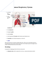 Anatomy Word