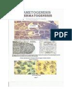 Embryo Lab Atlas Copy
