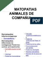 1-2 Dermatopatias. Animales de Compañia Pptx