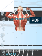 Muscular System of Carcharhinids