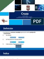Operador de transformación (cruce o cruza) - Algoritmos genéticos