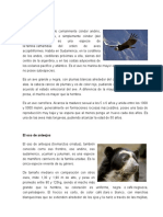 Sierra Animales en Peligro en Ecuador