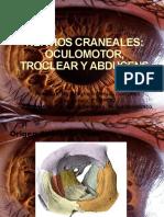 NERVIOS CRANEALES (III, IV, VI)