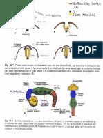 Embriología SN