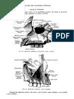 Tratado de Anatomia Humana Quiroz Tomo I_108
