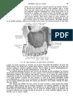 Tratado de Anatomia Humana Quiroz Tomo I_109