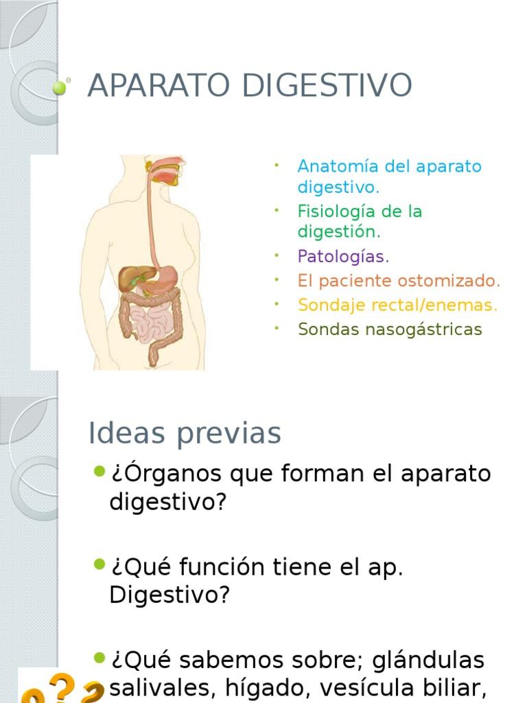 Excelente Anatomía Y Fisiología Del Sistema Digestivo Become ...
