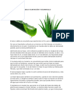 Sabila Plantacion y Desarrollo