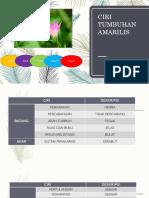 PPT  Amarilis