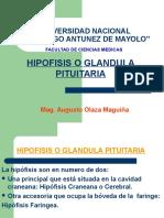 CLASE 15 Hipófisis Falta Hipotálamo