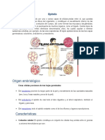 Epitelio y Glandulas-Patologias
