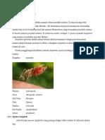 Klasifikasi Nyamuk Anopheles