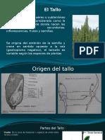 Botánica, Tallo 2015-II