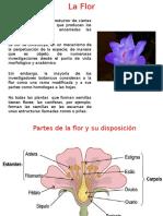 Botánica, Flor 2014-II